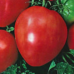 tomato_ox_heart_red.jpg