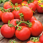 pomidor-gruntowy-promyk.jpg