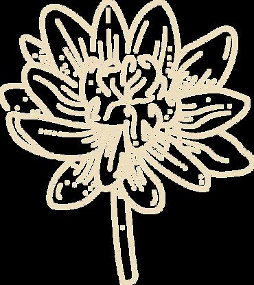 blossoming lotus  _ Mind-Body Wellness _ Spokane