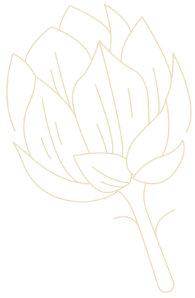 White sketch of a lotus