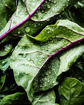 close up of washed salad greens.