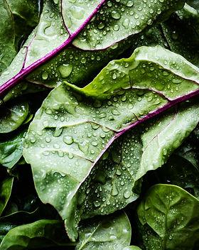 close up of washed salad greens