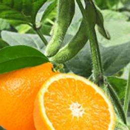 gel-de-baño-naranja-y-soja.png