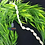 Thumbnail: Cowrie Rope Choker