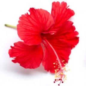 Kombucha: Hibiscus & Cardamon