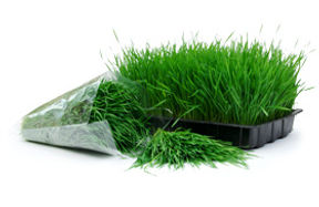 Wheatgrass-tray-bag.jpg