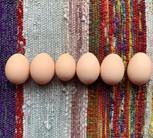 こっこの生みたて卵