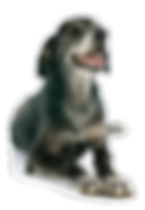 elderdog.png