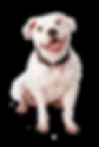 dog-pitbull-19.png