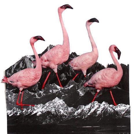 flamingo copy.jpg