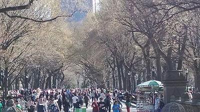 Central Park Tours, Central Park Pedicab Tours