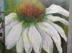 White Echinacia