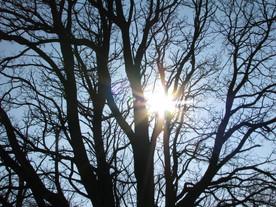 Catalpa tree at Robinson Cemetery in Hannibal, Mo., has deep roots