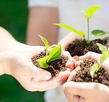 sustainability_environment.jpg