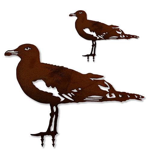Möwe (Vogel)