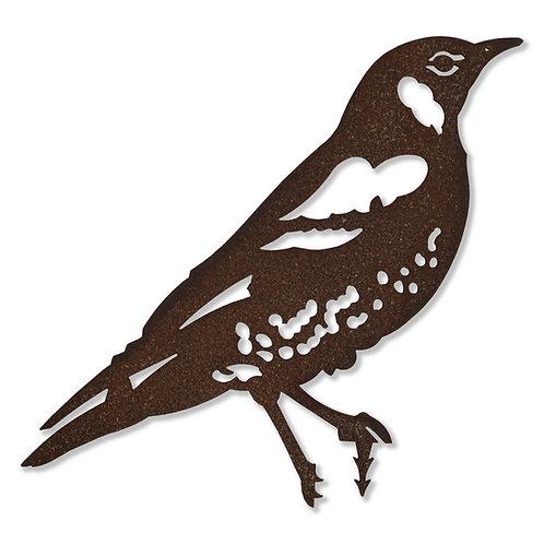 Drossel (Vogel)