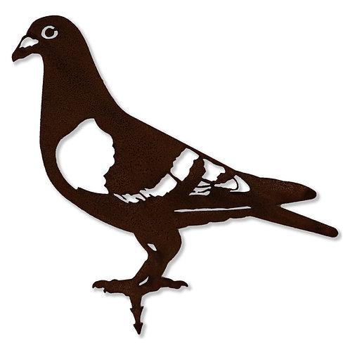 Taube (Vogel)