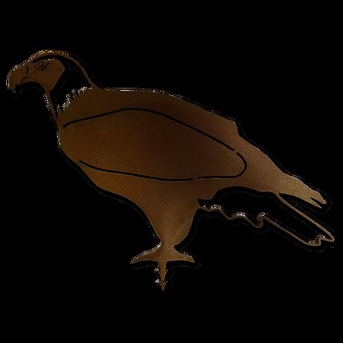 Adler (Vogel)