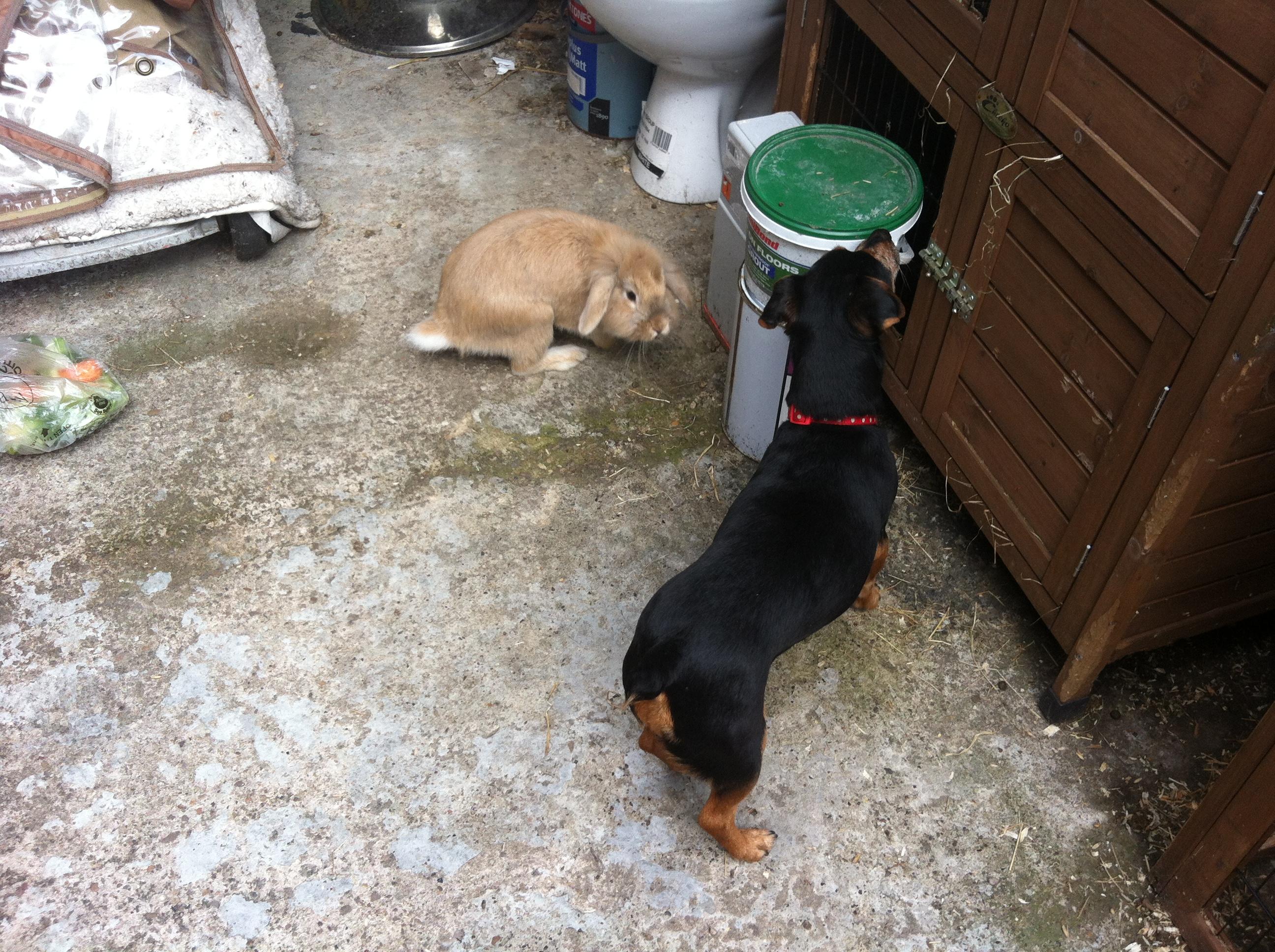 Bonny with Gizmo