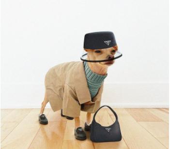 How I Feel About Designer Brands Making Pet Clothing...