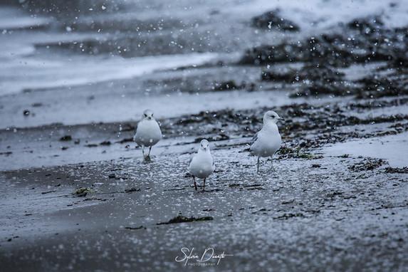 die drei möwen vom strand