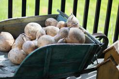 Gourd decor