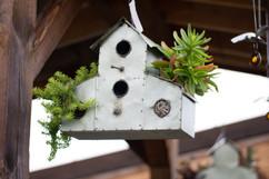Birdhouse w/ succulents