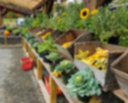 gords-sunflowers-cabbages-pumpkins-southwick-ma