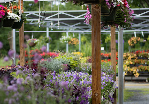 flowers-annuals-hanging-baskets-shade plants-sun plants