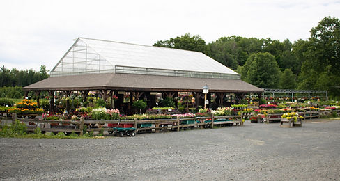 greenhouse-flowers-perennials-annuals-shrubs-trees-baskets