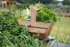Herb Arrangements