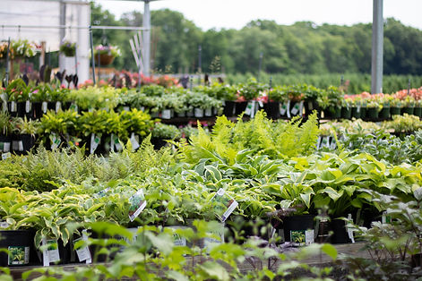 shade-annuals-perennials-ferns-shrubs