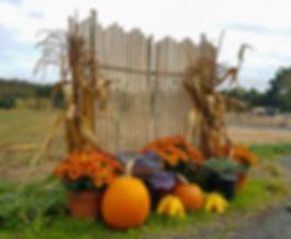pumpkins-mums-cornstalks-southwick-ma