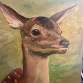Hey Deer