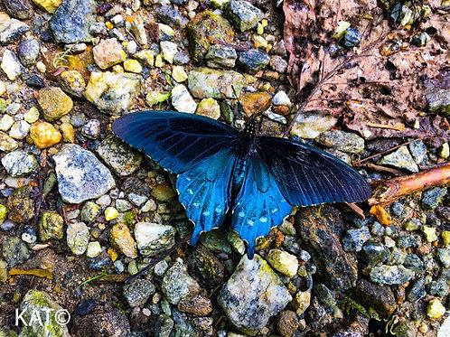 """bleu butterfly (16"""" x 20"""" canvas)"""