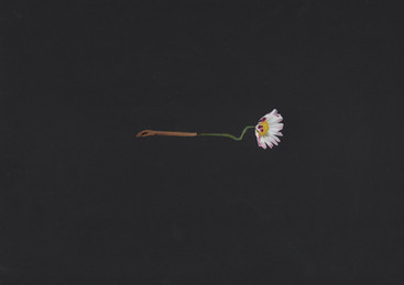 fleur6-2.jpg