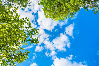 blue-sky-green-leaves-beautiful-white-cl