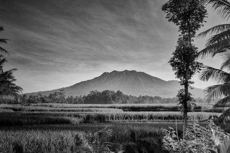 Alexia Cumin Indonésia_1605.jpg