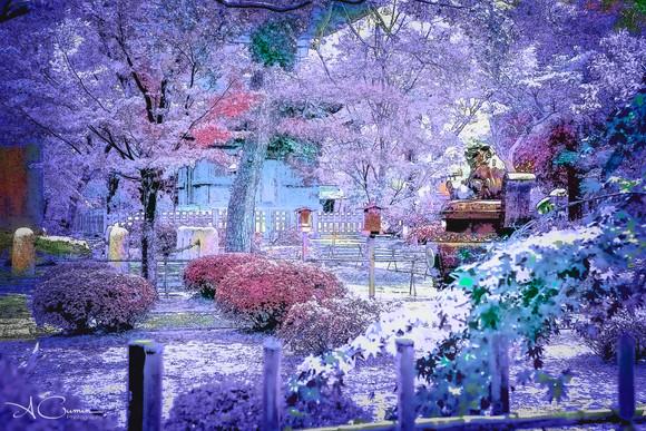 Alexia Cumin Photographe Tokyo_8584 copie.jpg