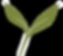 banyan%20leaf_edited.png