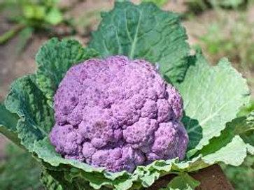 Cauliflower Purple 2 pack
