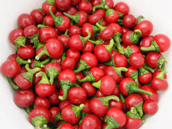 Hot Cherry Pepper Single 3 inch pot