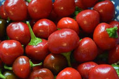 Sweet Cherry Pepper Single 3 in pot