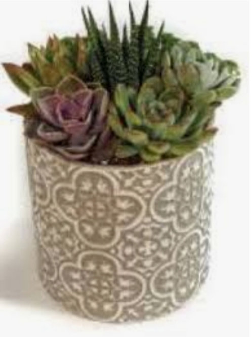 Succulent Ceramic Pot 2.5in