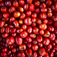 canning tomatoes.png