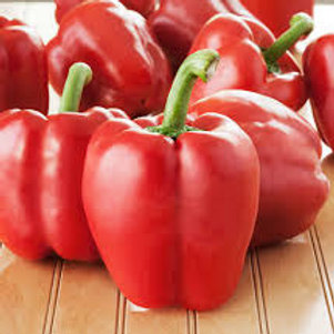 Red Bell Pepper Single 3 inch pot
