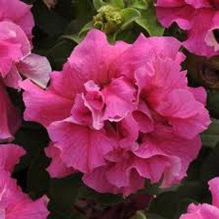 Petunia Double Cascade Pink Flat 32 plants