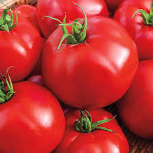 Big Beef Tomato Single 3 inch pot