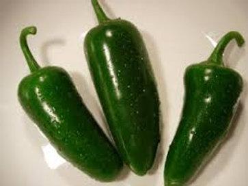 Fooled You Heatless  Jalapeno Pepper Single 3 in pot