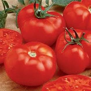 Beef Master Tomato Single 3 inch pot